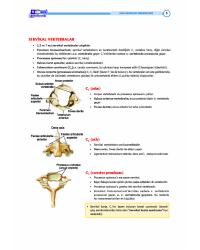 DUS Şampiyonların Notu - ANATOMİ ( 7-1 )