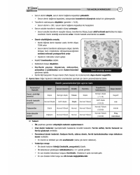 Tus Kampı Özel Notu - Dahiliye ( 2021 )